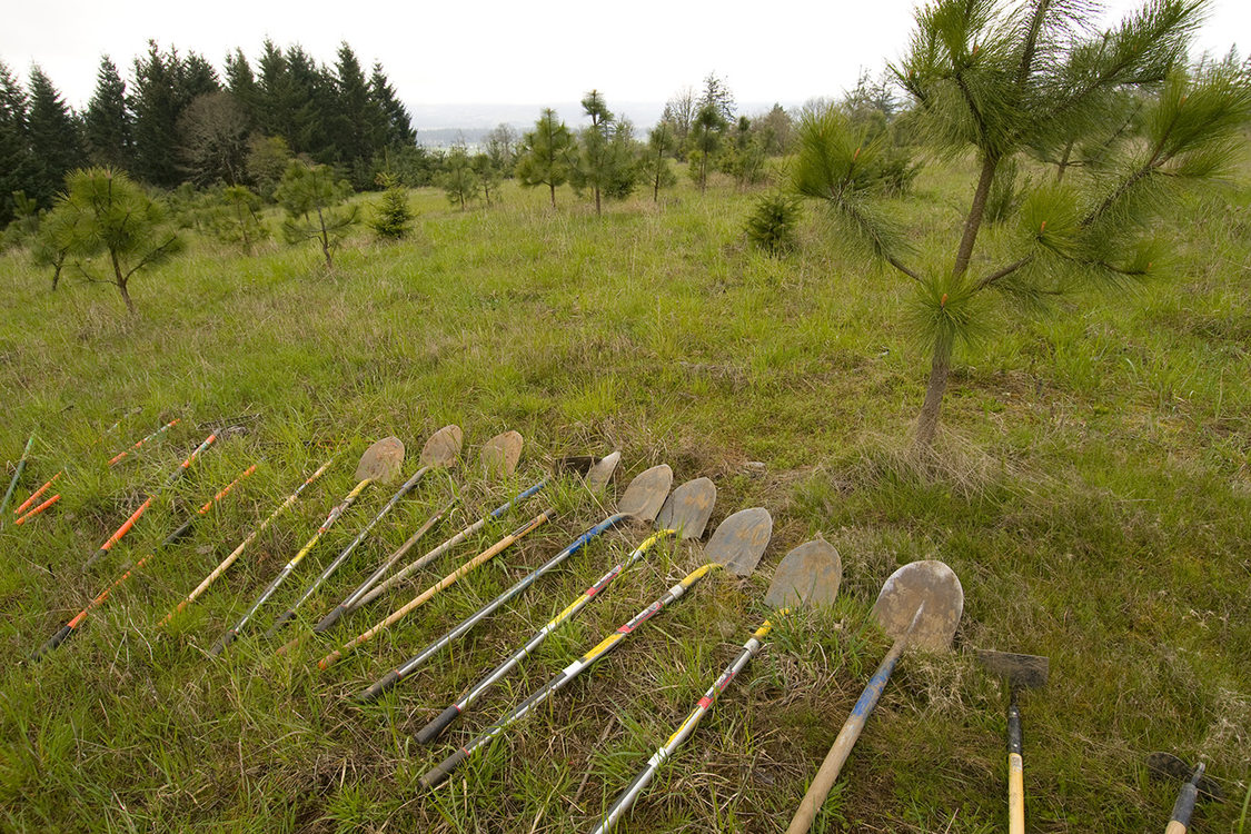 Shovels lined up on a grassy hillside in preparation for maintenance work