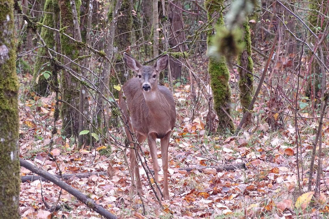 photo of deer at Oaks Bottom Wildlife Refuge by Joshua Baker