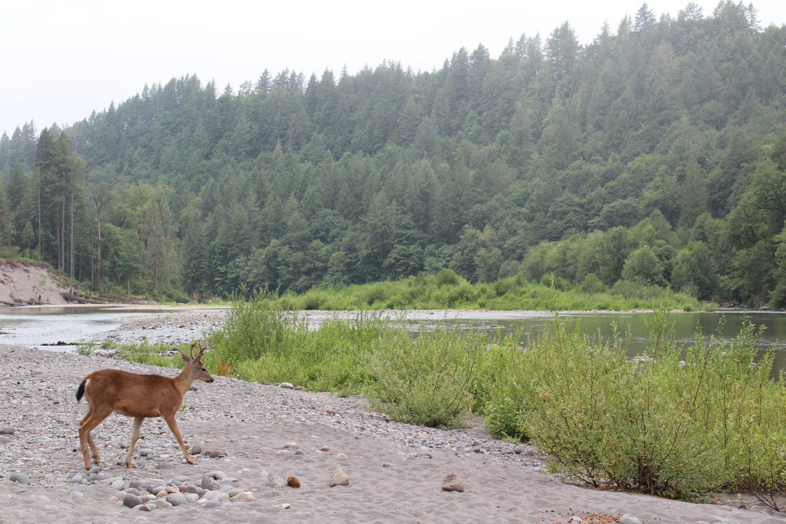 photo of deer at Oxbow Regional Park by Bee Port
