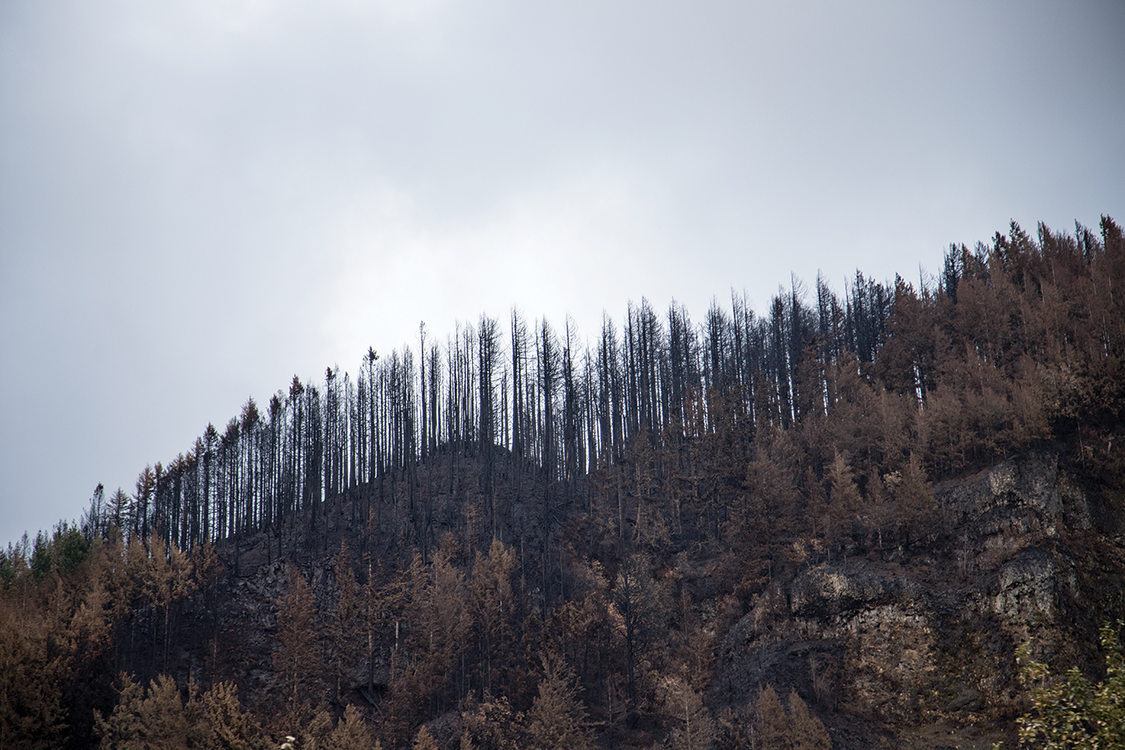 ridge of trees burned from the Columbia Gorge wildfire