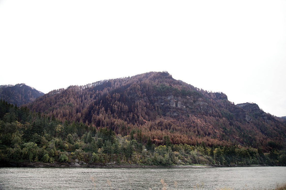 photo of burned section of forest from the Columbia Gorge wildfire