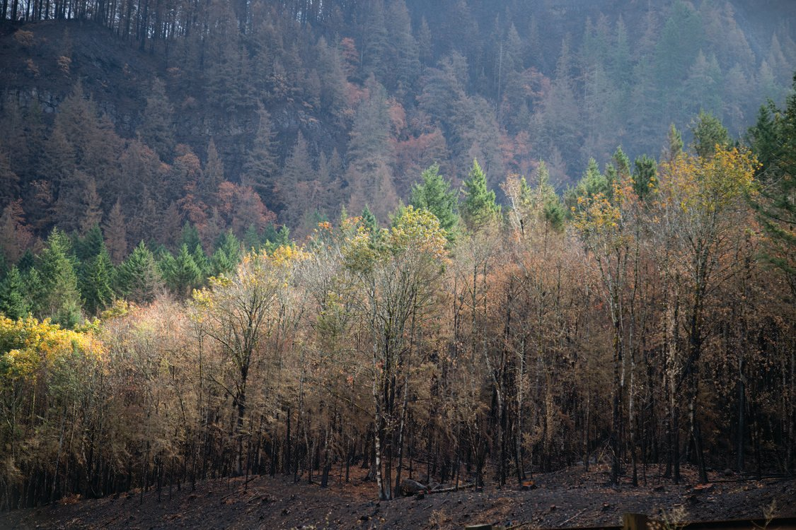 photo of Columbia River Gorge wildfire