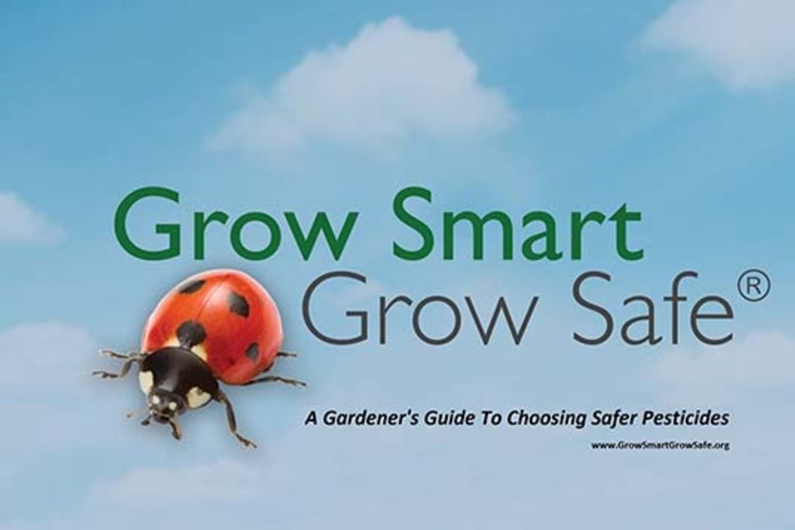 a ladybug appears next to the words grow smart, grow safe