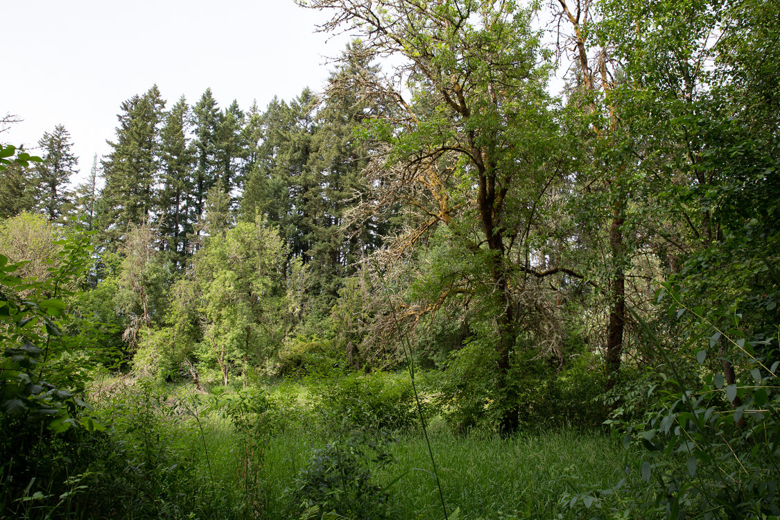 East Council Creek Natural Area