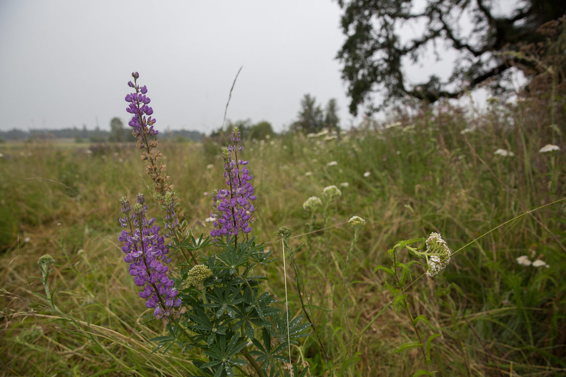 Wildflowers at Howell Territorial Park