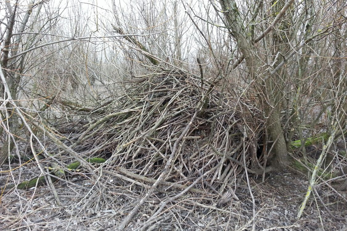 photo of beaver lodge at Smith and Bybee Wetlands Natural Area