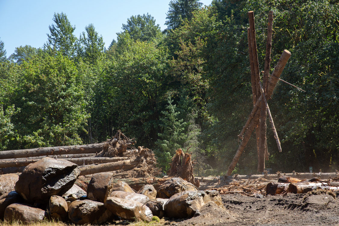 Logs being moved at Oxbow Park to build logjam in the Sandy River