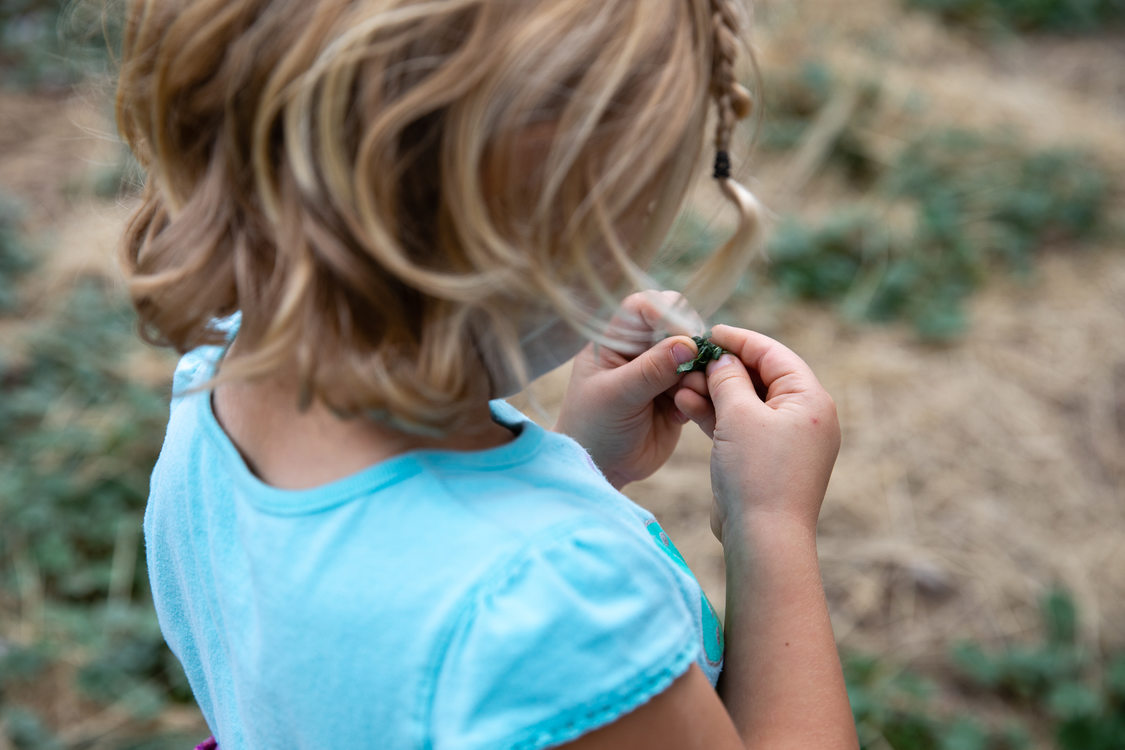 Madi Calendar, 4, examines plant leaves during a guided trail walk at Killin Wetlands Nature Park.