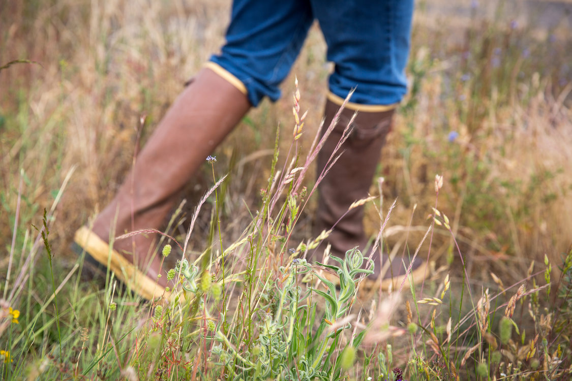 Boots of person walking through prairie grass
