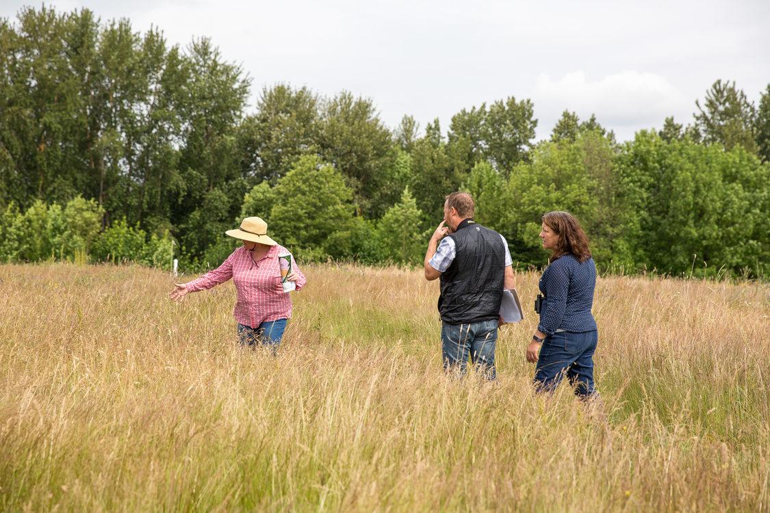 Three people walking through tall prairie grass
