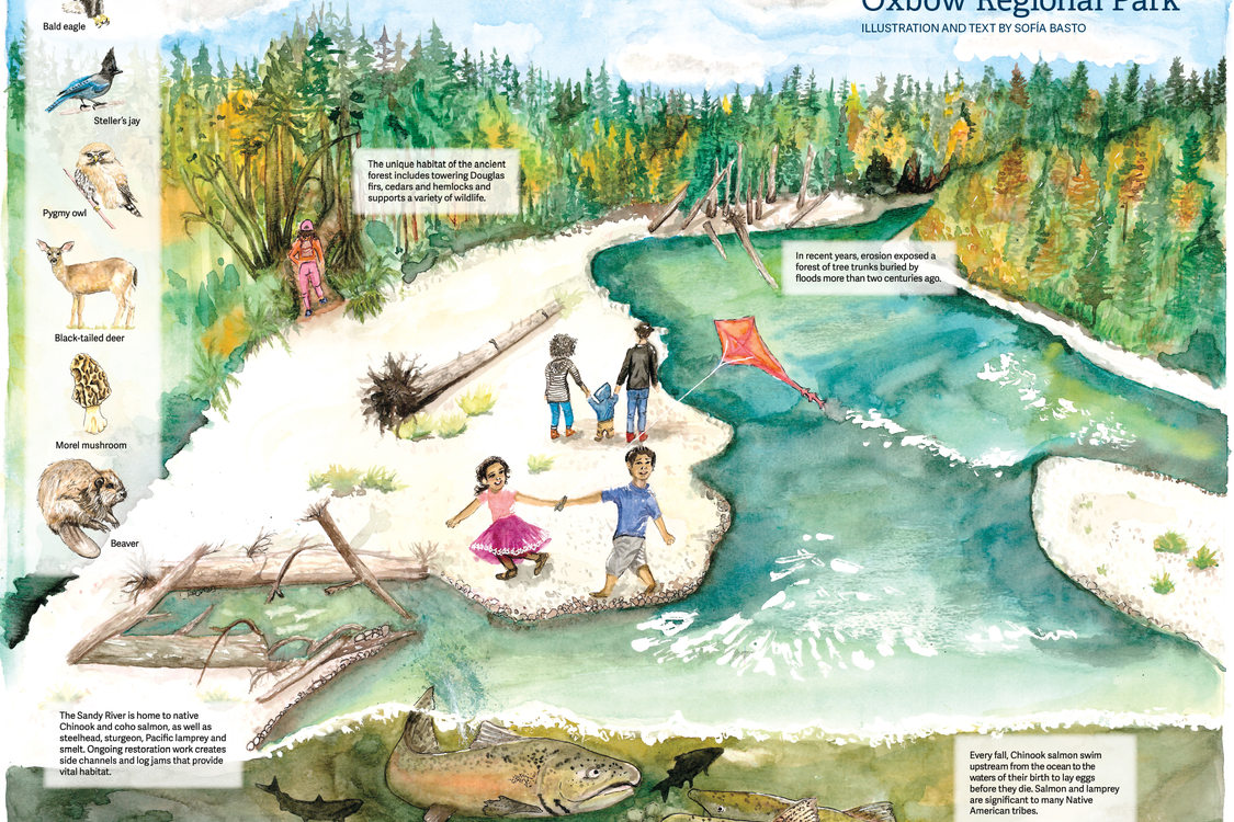 the magic of oxbow regional park explore a watercolor illustration