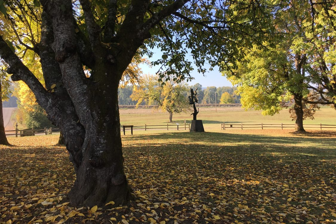 photo of Howell Territorial Park field in autumn
