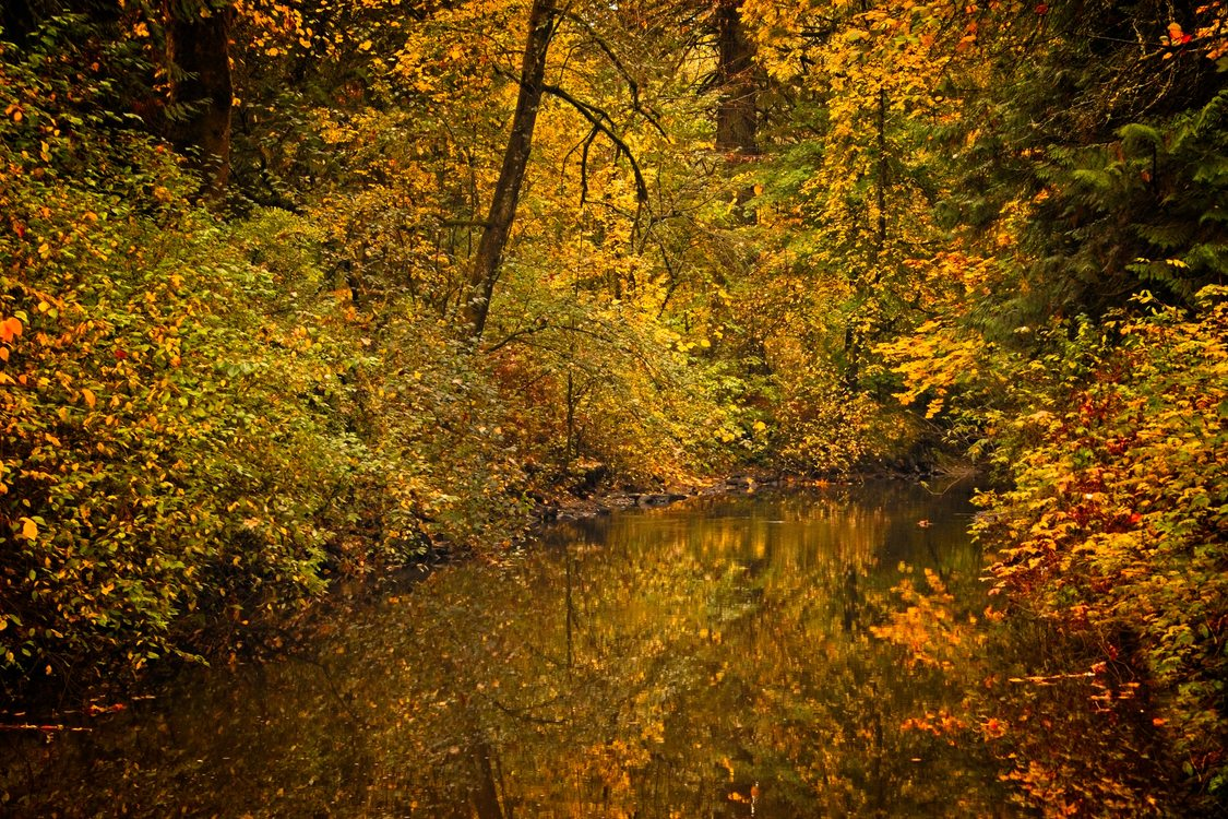 Fall image of Johnson Creek surrounded by trees with changing leaves of yellow, orange and red colors.