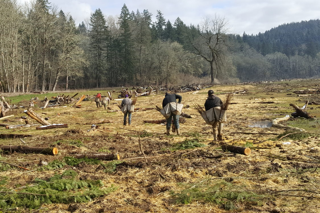 Crews in February installing native plants at Metro's Richardson Creek Natural Area in the Clackamas River Basin