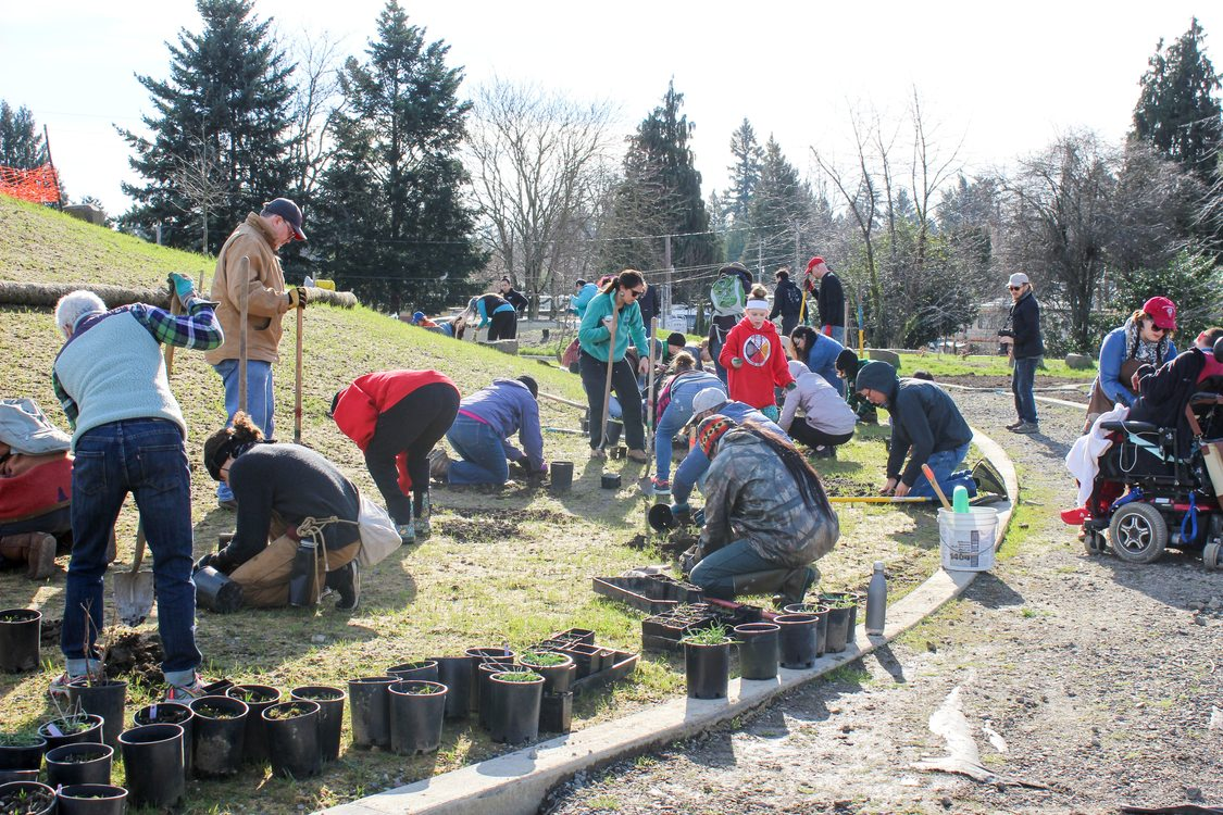 Youth and adults work together at a planting event on a hill next to a walkway. There are several potted plants and people digging with shovels or kneeling to put plants in the ground.