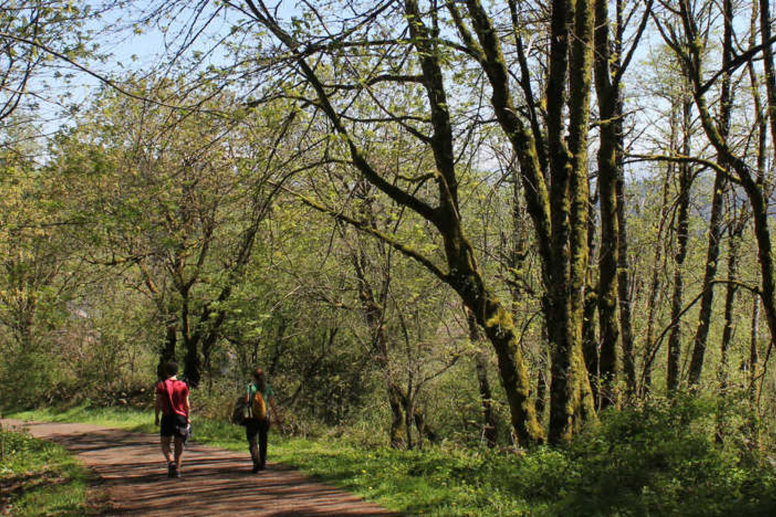 two people walking on trail surrounded by forest