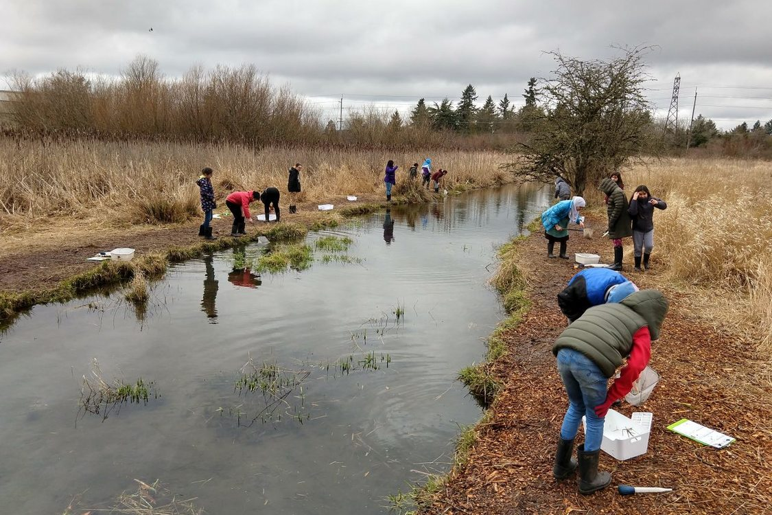 Around fifteen children are along either side of a creek with tall grasses and trees surrounding it. They are doing an activity that involves catching something from the creek in a net and then examining it in a container for identification.