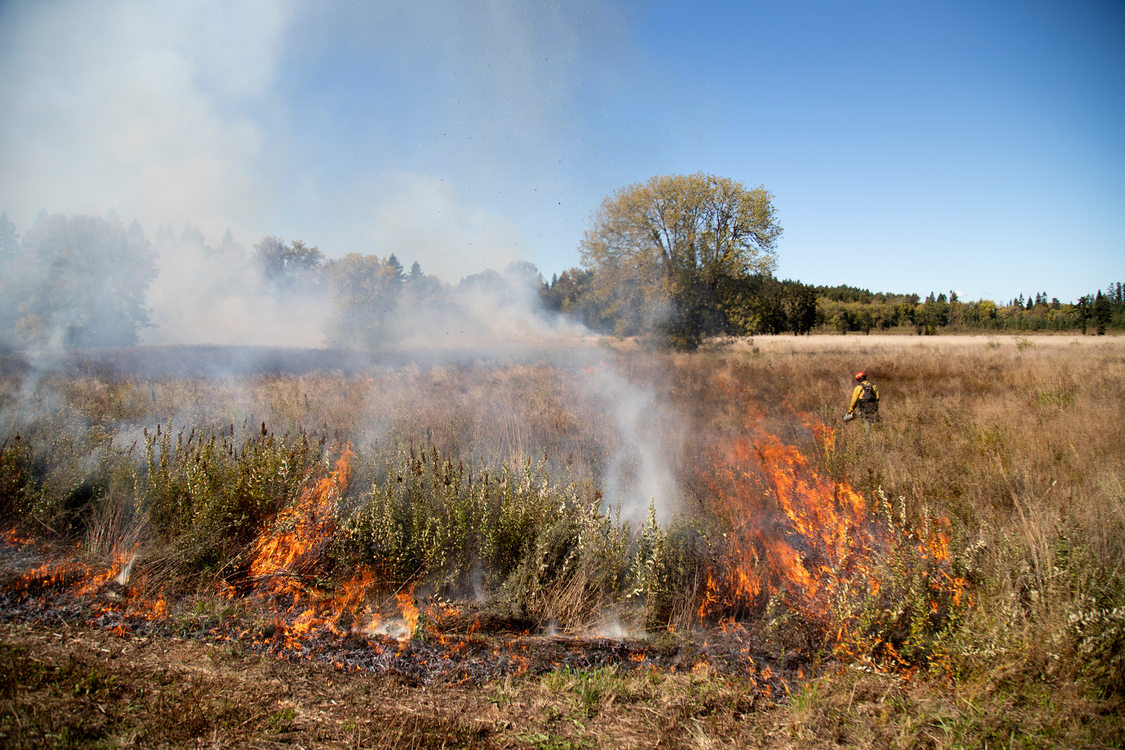 firefighter setting Quamash Prairie Natural Area on fire during a controlled burn Oct. 1, 2019