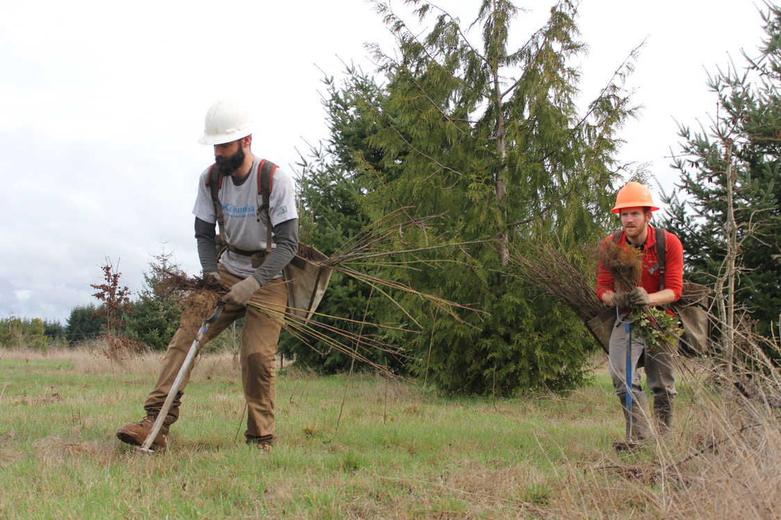 Two men plant trees in a natural area.