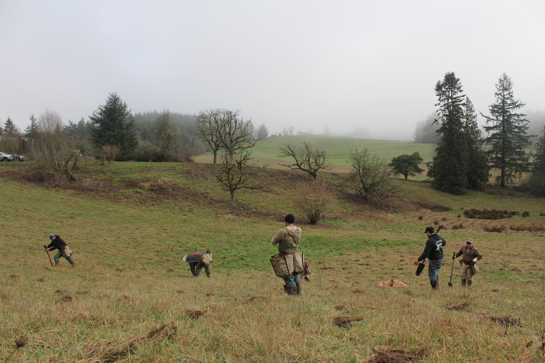 A restoration crew plants trees at North Abbey Natural Area.