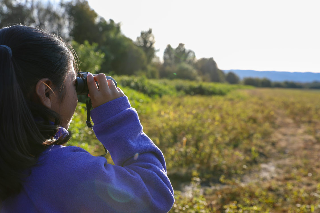 Child looking out Smith and Bybee wetlands using binoculars
