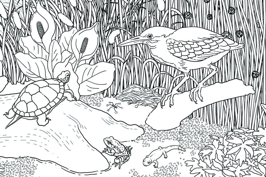 Close-up of coloring book illustration.