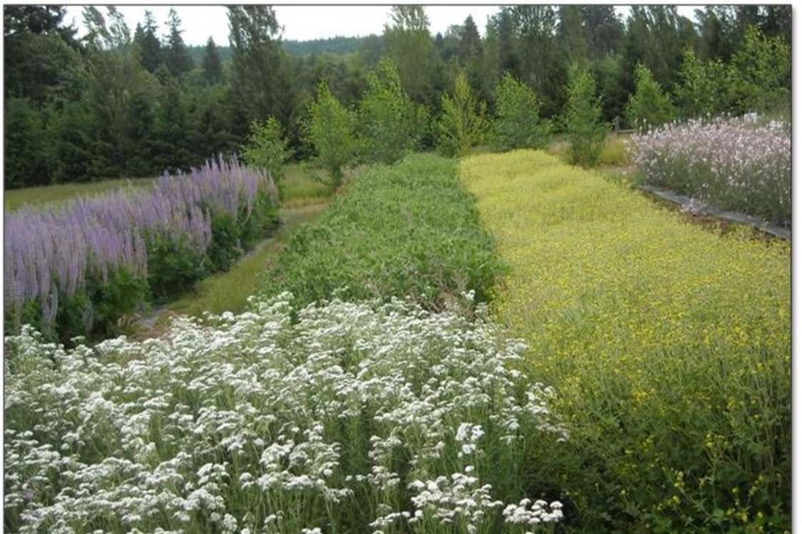 Beds of native plants in bloom at the Native Plant Center.