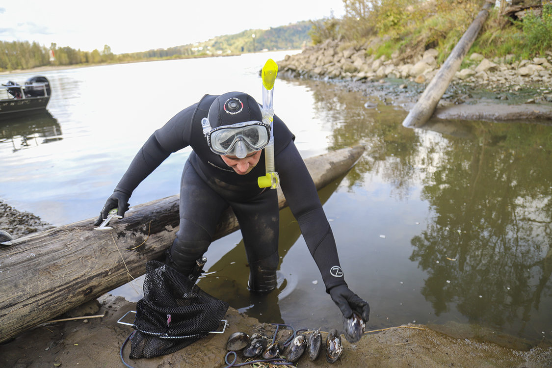 Woman in black wetsuit with snorkel and mask steadies themselves on a fallen log while lining up mussels on the shoreline.