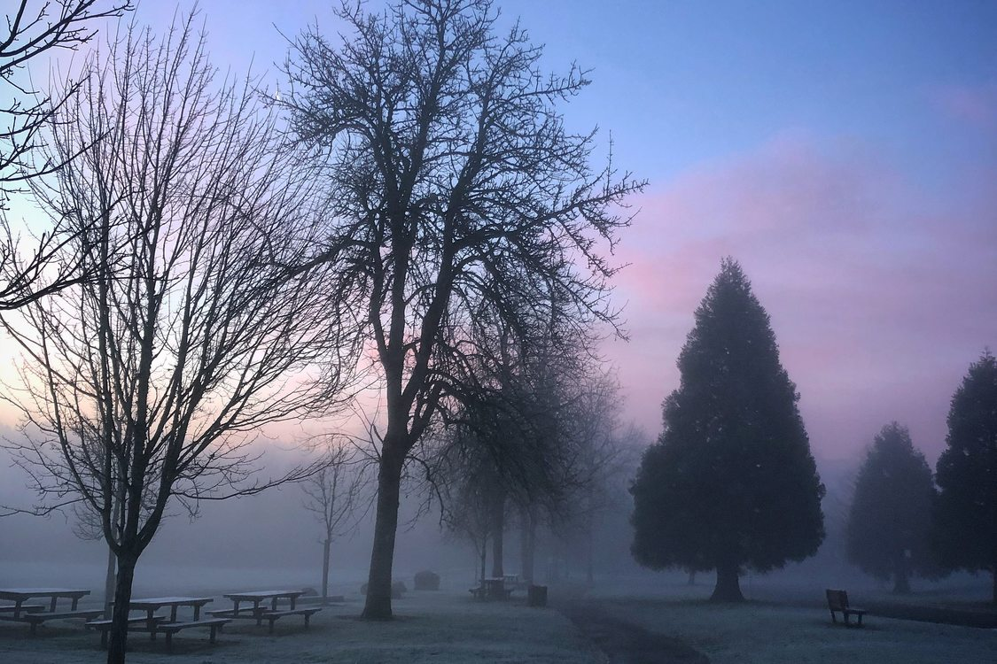 Purples and blues glow in the distant sky behind silhouetted trees in a park filled with fog.