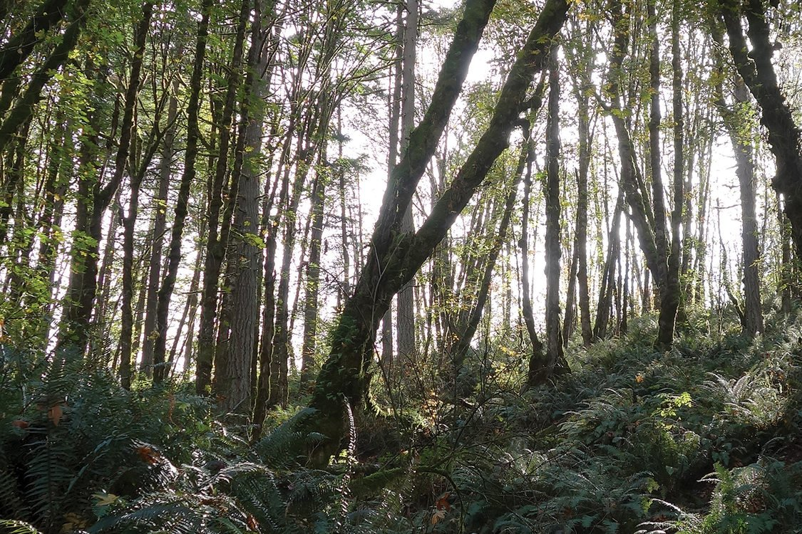 Trees and ferns grow up a steep slope.
