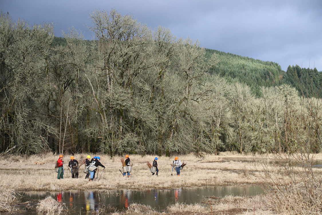 A group of Metro staff wearing hard hats and boots works on wetland restoration by planting native vegetation alongside a grassy riverbank