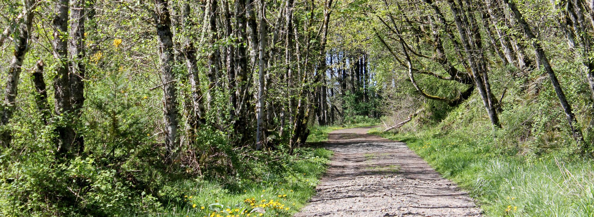 photo of trail at Gabbert Butte