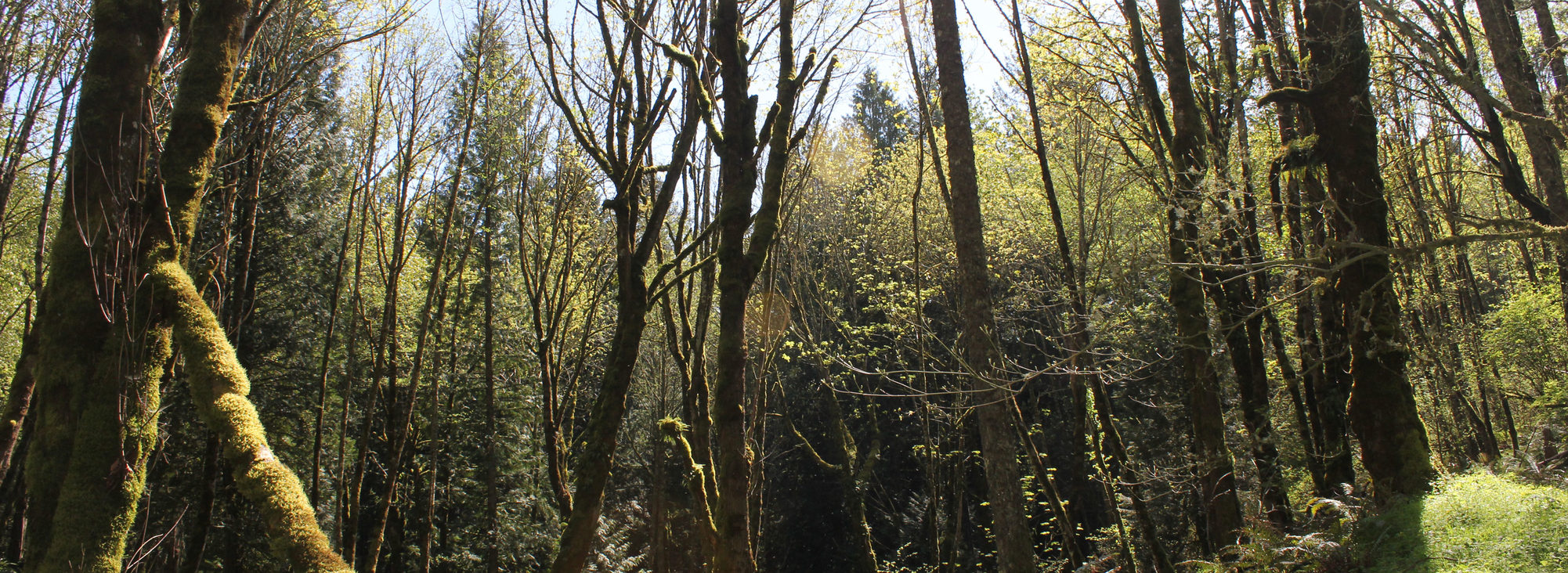 photo of trees at Gabbert Butte