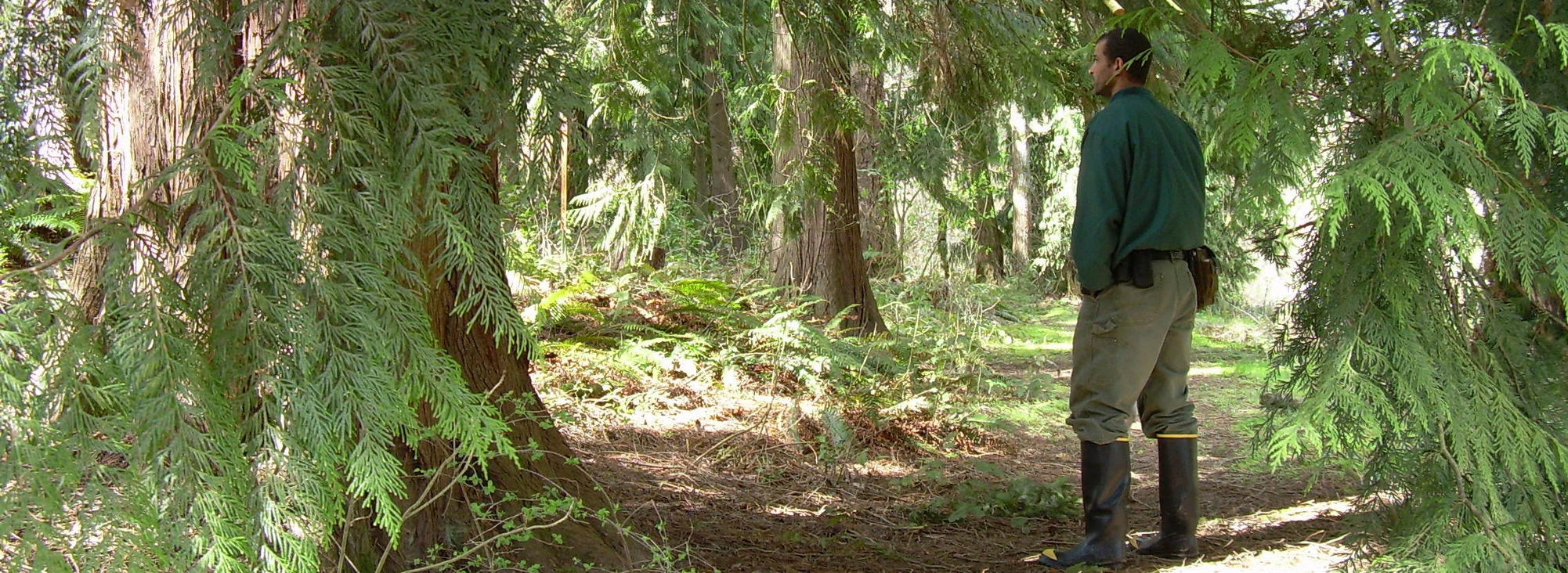 photo of cedar trees at East Council Creek