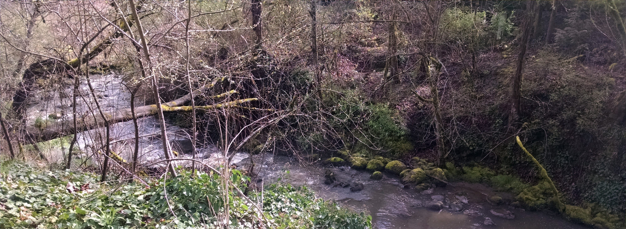 Fallen log over Tryon Creek