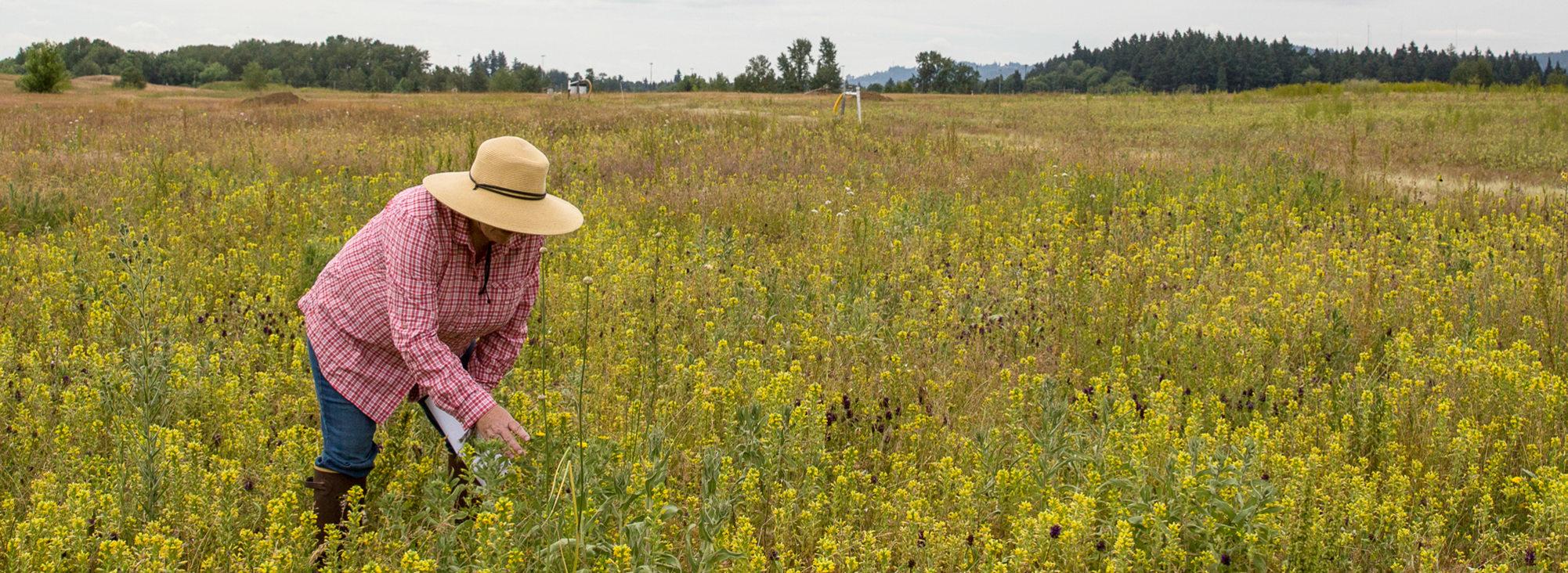 Metro scientist in a field of wildflowers at St. Johns Prairie