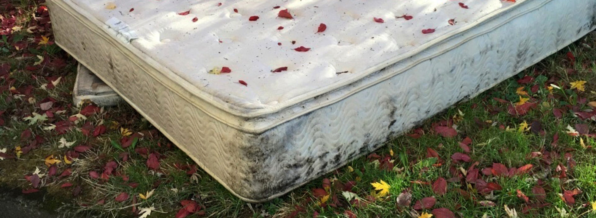 fallen leaves rest on a mattress dumped on a city curb