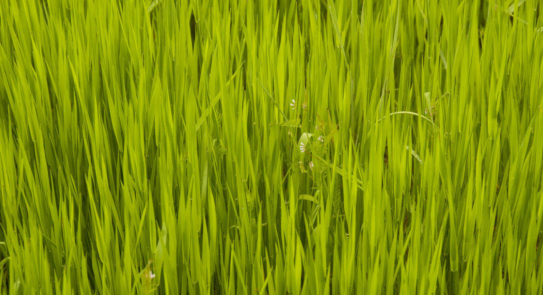 photo of green grass