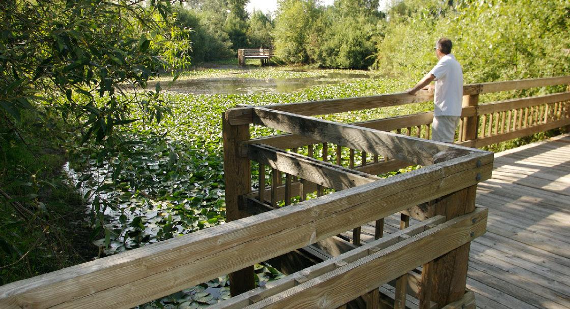 Pond at Blue Lake Park