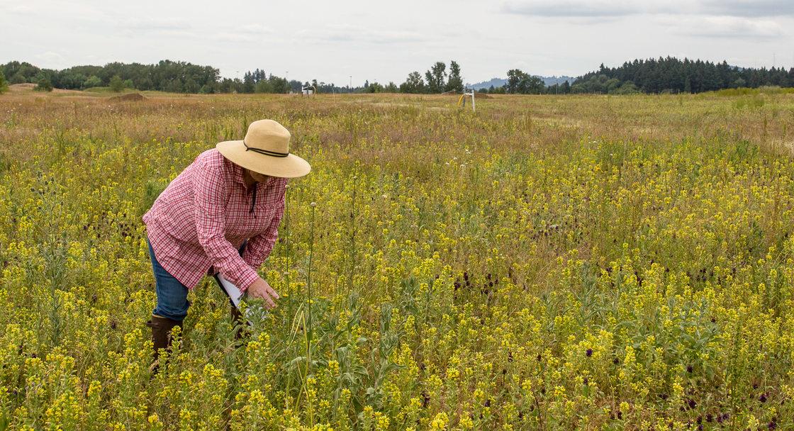 Elaine Stewart stands among wildflowers at St. Johns Prairie