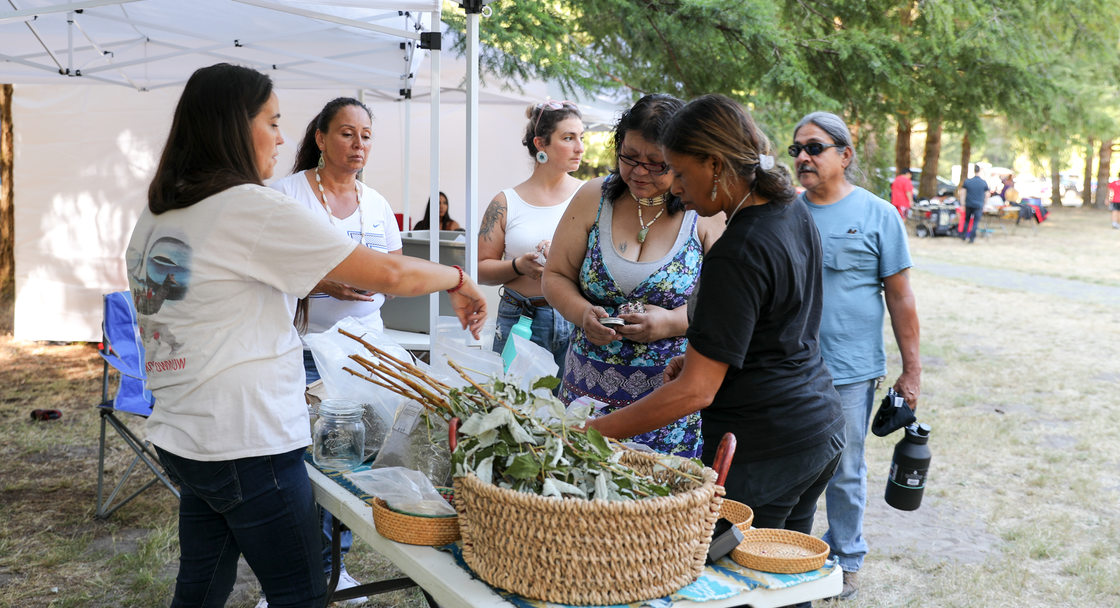 Vendor points out different native plants to mix for tea