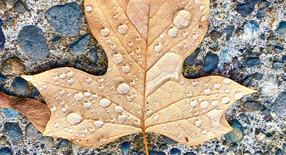 A large maple leaf covered in drops of water lies on a stony piece of concrete.