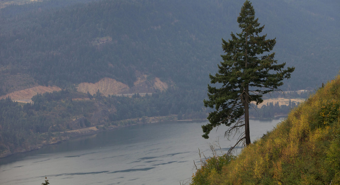 A scenic photo of the Columbia River with a tree in the foreground