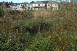 a photo of tall grasses and plants with homes in the background