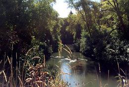 The Tualatin River runs through the Atfalati Prairie just south of Cornelius.
