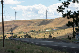 Windmills and wheat fields in Gilliam County
